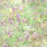garden purple vellum
